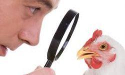 Informatie betreffende derde uitbraak vogelgriep